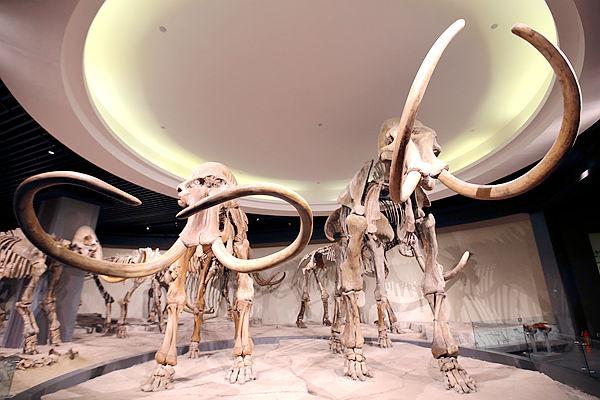 新華VR:大慶博物館來自第四紀的問候