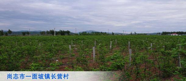 尚志市一面坡镇长营村