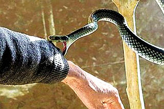 省二院救治3例蛇咬傷患者